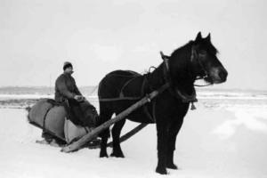 Arne Fjeldstad på vei til tømmerkjøring på Krokskogen i 1950-årene, med den siste hesten på gården, «Basse».